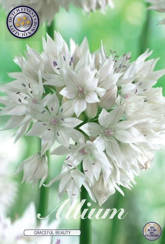 5 Allium Graceful Beauty, Zierlauch Gr. 6/8 Weiss