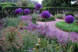 allium_mix